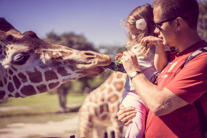 Father's Day Breakfast Lunch Events at Werribee Zoo